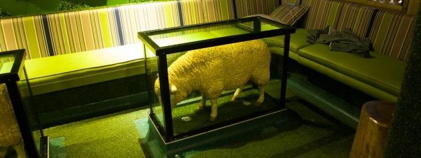 Sheep in a Glass Table! Anything goes!